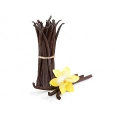 Vanilka BIO | LUSK 2ks velikost 18-20 cm JUMBO průměrná váha cca 4-7g